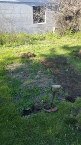 You can see where my modern-traditional garden from last year was. Here I enlarged it a bit.